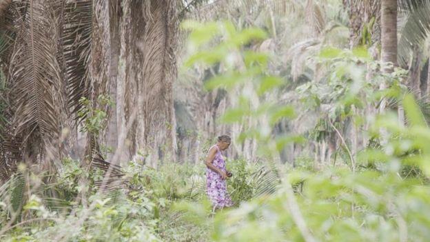 研究表明,人畜共患疾病的風險在熱帶森林中最高,那裏生活著許多土著群體,如巴西的巴巴蘇人(Babassu)。