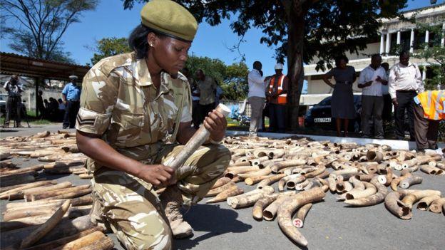 Seizing ivory horns originating in Uganda