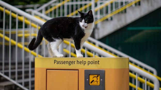 The commuter cats who became fur-mous _110228459_d8f54992-03ad-480e-9744-f08b6632d890