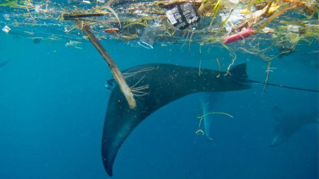 Arraia na Indonésia junto a plástico boiando
