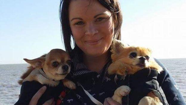 维吉养了2只吉娃娃犬