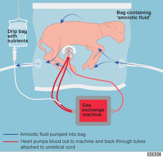 graphic of lamb in the biobag