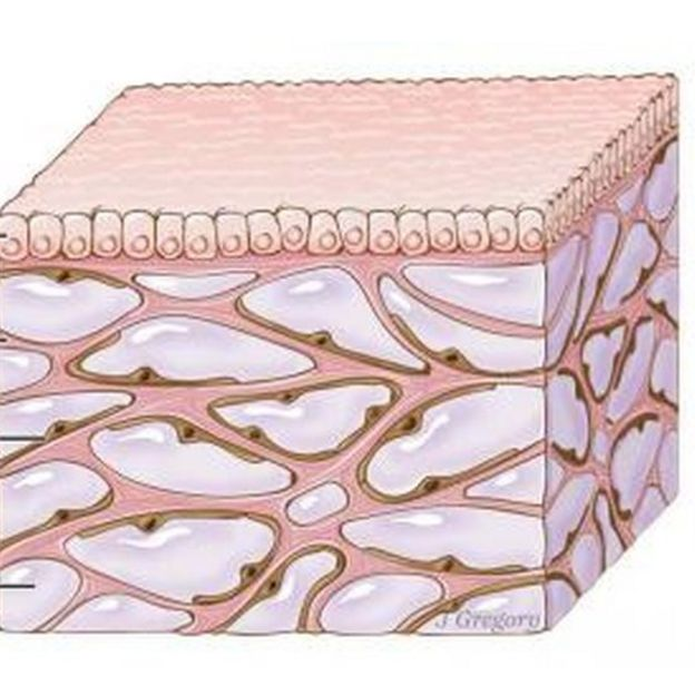 Structure of the Interstitium