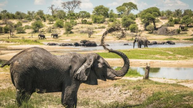 Male African elephants congregate along hotspots of social activity on the Boteti River