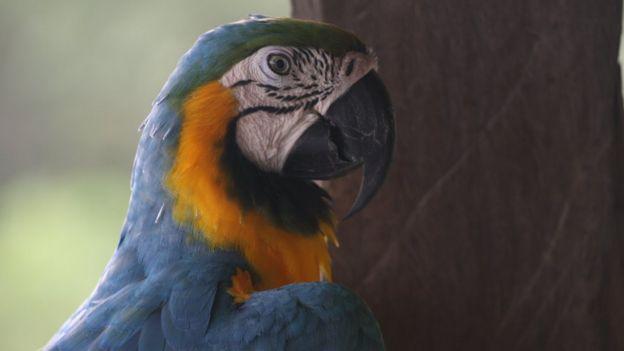 Arara em área protegida da Amazônia