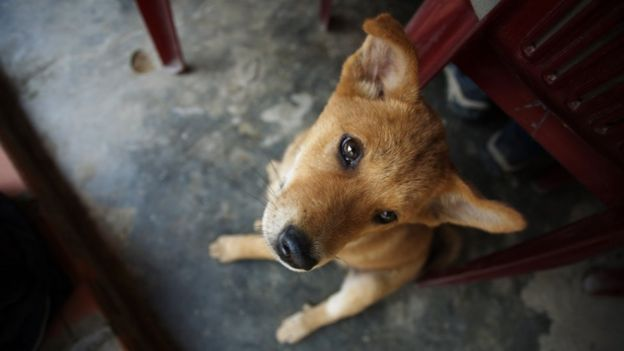 Trước nay bọn trộm chó vẫn bị xử theo điều 173 Bộ Luật Hình sự Việt Nam