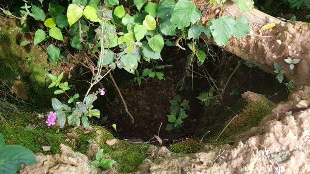 Looking down into an overgrown pit