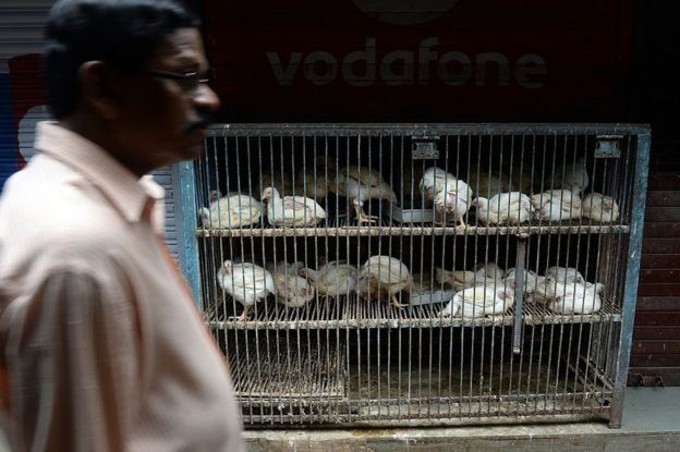 Un hombre pasa frente a una jaula con pollos