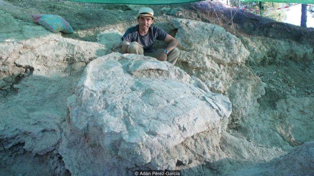 Rùa Titanochelon trưởng thành đạt kích cỡ khổng lồ