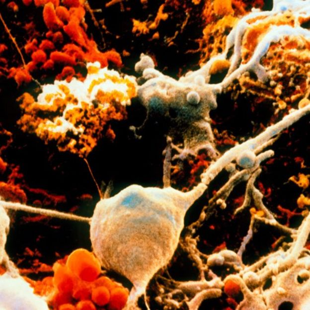 Neuronas y células gliales