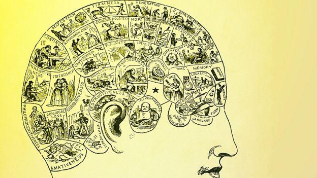 Cabeza con divisiones y dibujos mostrando las áreas del cerebro.