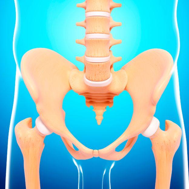 Ilustração dos ossos da coluna vertebral e do quadril