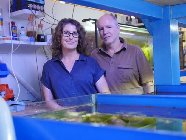 Husband-and-wife researchers Associate Prof Sandie Degnan and Prof Bernard Degnan