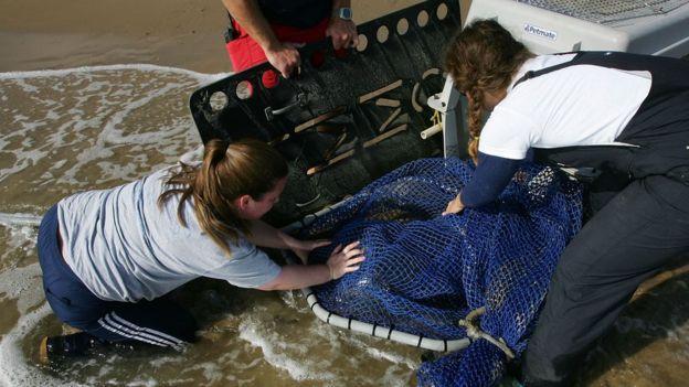 Un grupo de personas rescata a un león marino de una playa de California