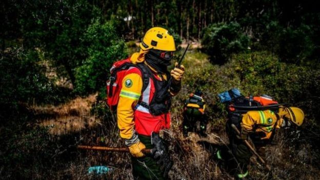Australia: How responsible are white trees in the spread of forest fires? 3