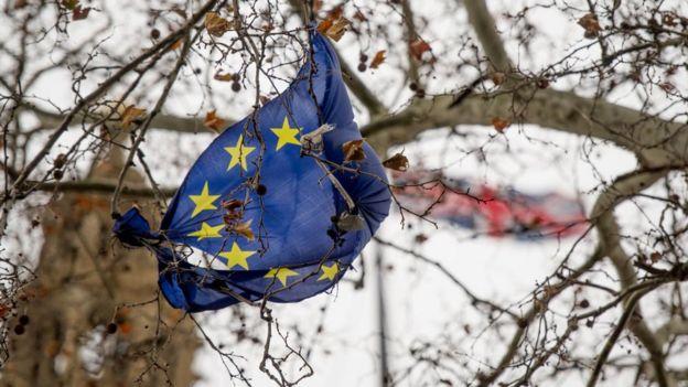 Bandera de la UE enroscada en las ramas de un árbol.