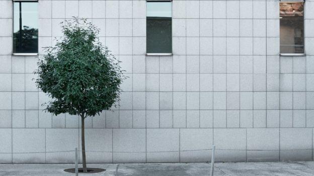 Un solo árbol.