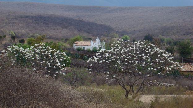 Caatiga, árvore e casa
