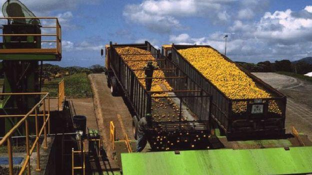 Caminhões da Del Oro com laranjas