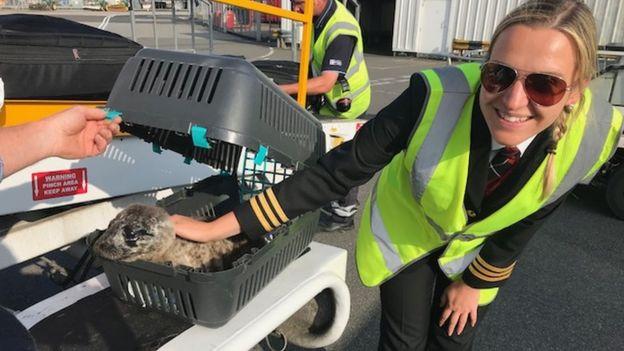 Loganair pilot Rimante Mizaraite and the seal