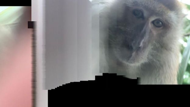 Селфи обезьяны