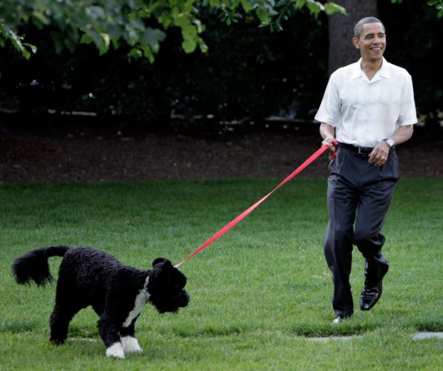 Barack Obama walks the first family's dog as he arrives at the Congressional Picnic on the South Lawn of the White House in Washington, DC on June 8, 2010.