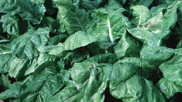 yeşil yapraklı sebze