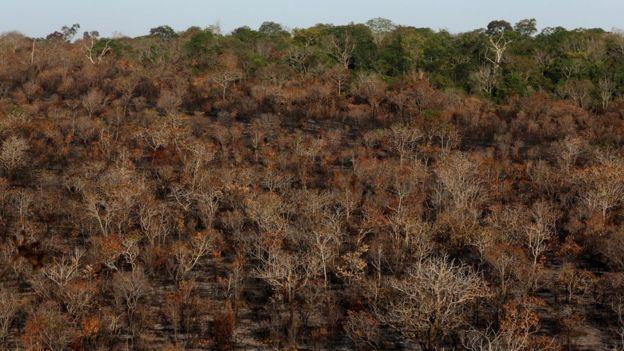 Imagem aérea mostra boa parte de floresta queimada