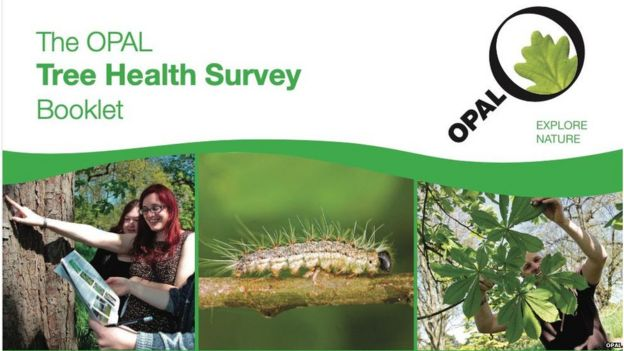 Cover of the Opal tree health survey booklet (Image: Opal)