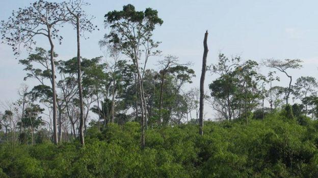 Floresta onde há bambu