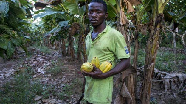 أحد مزارعي الكاكاو