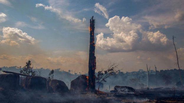 اندلع أكثر من 70,000 حريق في غابات الأمازون البرازيلية عام 2019