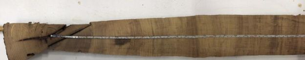 amostra da árvore