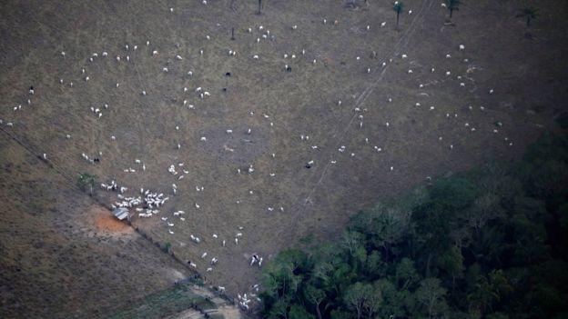 Foto aérea mostra gado em área desmatada perto de Porto Velho