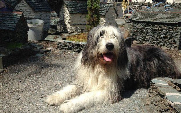 A dog in the model village