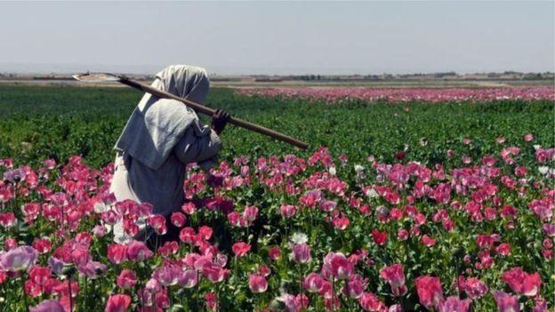 گزارش ها از کاهش تولید مواد مخدر در افغانستان حکایت دارد