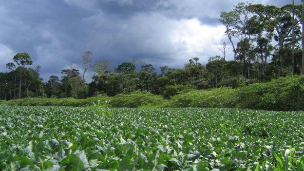 Plantação de soja no Mato Grosso, área original de cerrado brasileiro