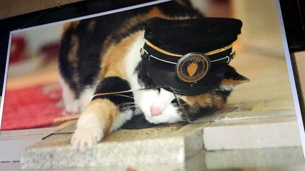 Кошка - начальник станции