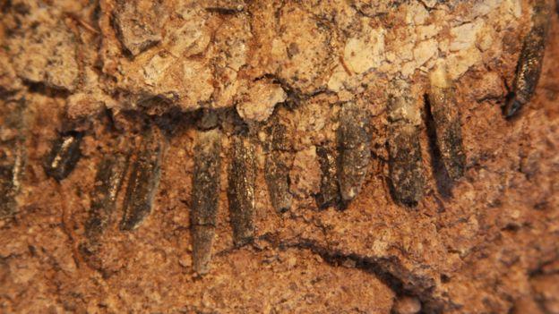 Dentes de dinossauro na rocha