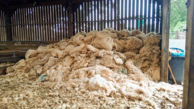 Sheep fleeces