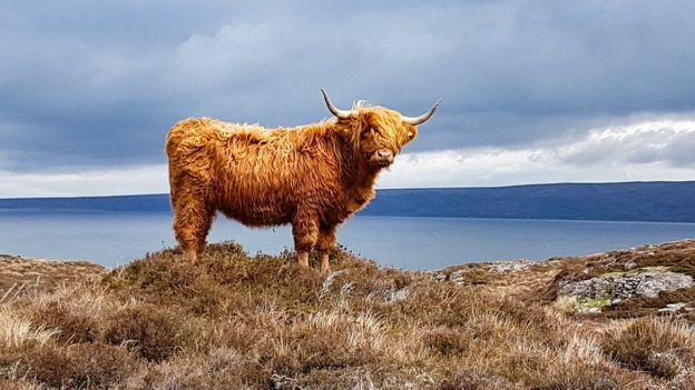 Шотландия больше известна природой, чем SLP