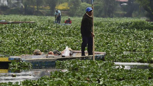 Un agricultor navega en las chinampas en una tradicional embarcación de fondo plano.