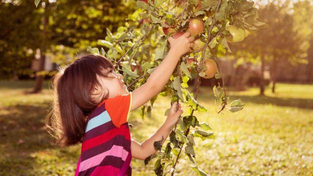 Criança pega maçã da árvore