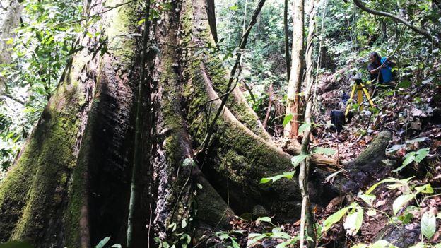 Base del tronco de Menara