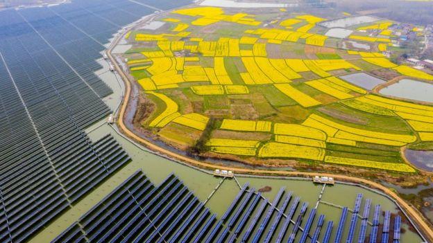 Hoa cải dầu nở rộ bên cạnh một nhà máy điện mặt trờ lắp đặt trên một hồ chứa, ở tỉnh An Huy, Trung Quốc, bao phủ một khu vực 160ha, tạo ra 110 triệu kWh điện vào 2018