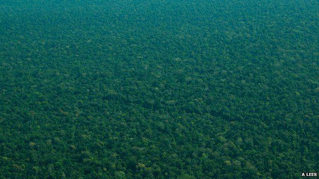 Amazon rainforest aerial shot (c) Alexander Lees