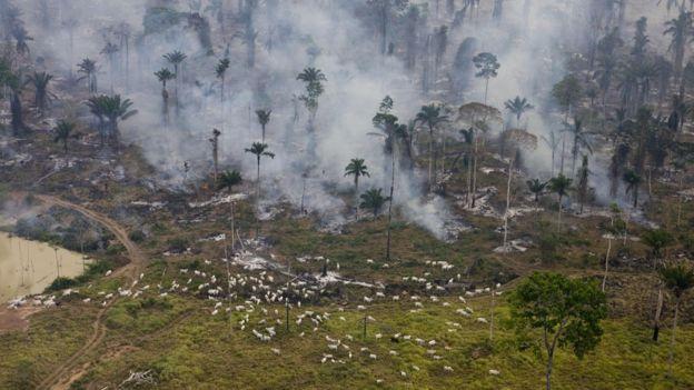 Fuegos artificiales diseñados para limpiar la selva brasileña para ganado y cultivos