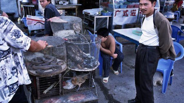 Serpientes, pájaros raros y monos son vendidos en mercados en Mongla.