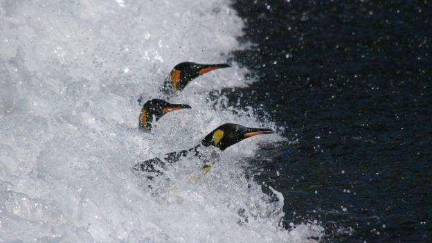 Pinguins-rei