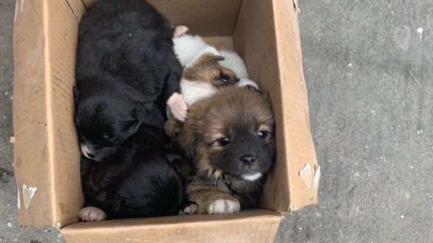 Animals abandoned in a box in Wuhan